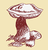Northwest Mushroomers